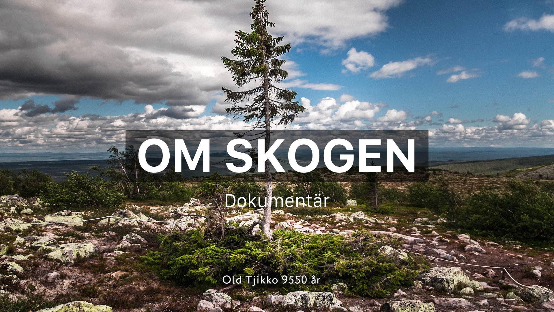 thefuture, Resurs, Om skogen