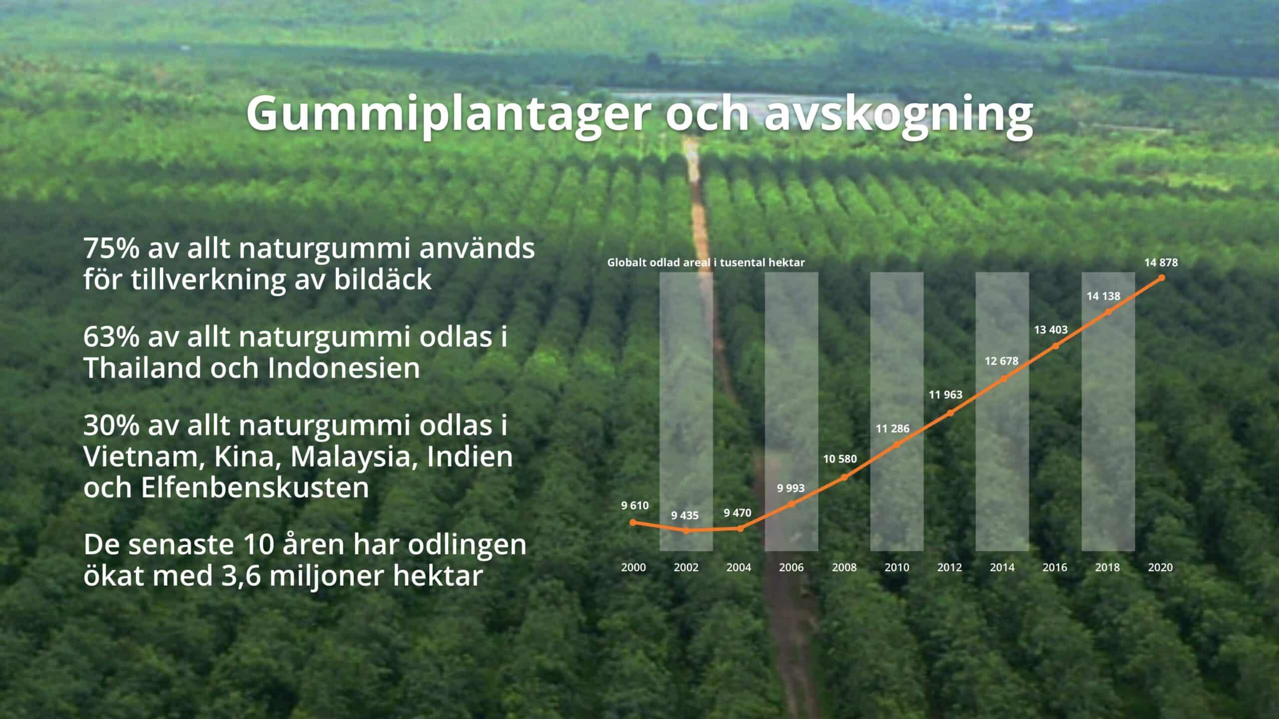 thefuture, Gummiplantager och avskogning